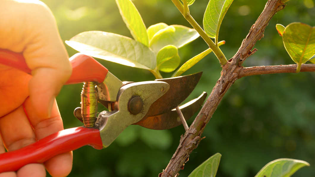 Learn More About Tree Removal and Pruning