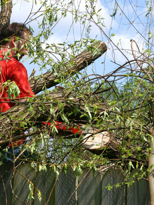 WHY SHOULD I REQUEST TREE PRUNING AND OTHER TREE SERVICES?